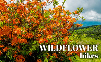 Wildflower & Wooded Hikes in the Smokies: Click to read more