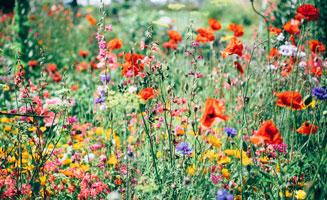Top Hikes to See Wildflowers in the Smokies