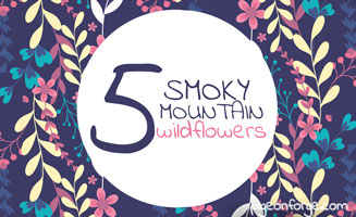 5 Gorgeous Wildflowers in the Smokies: Click to read more.